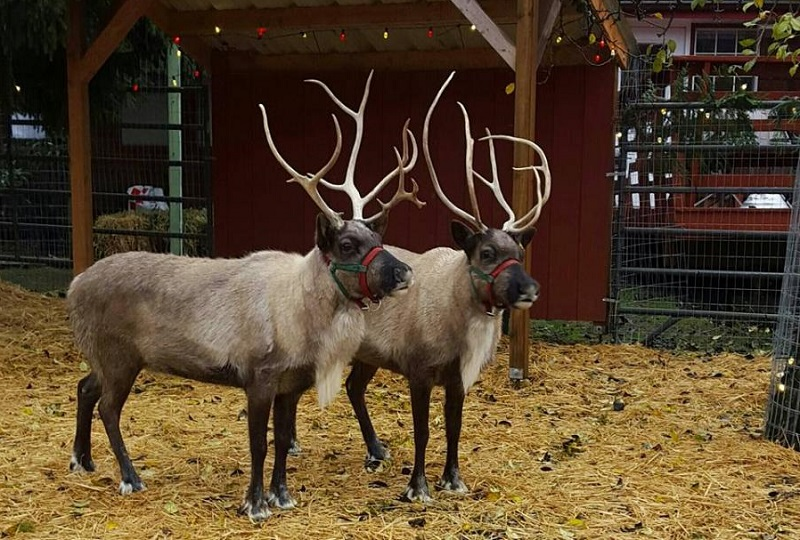 Ready for Reefer and Reindeer in Bothell